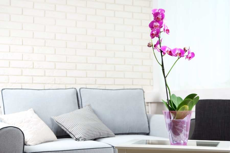 Tropical Plants for Growing Indoors
