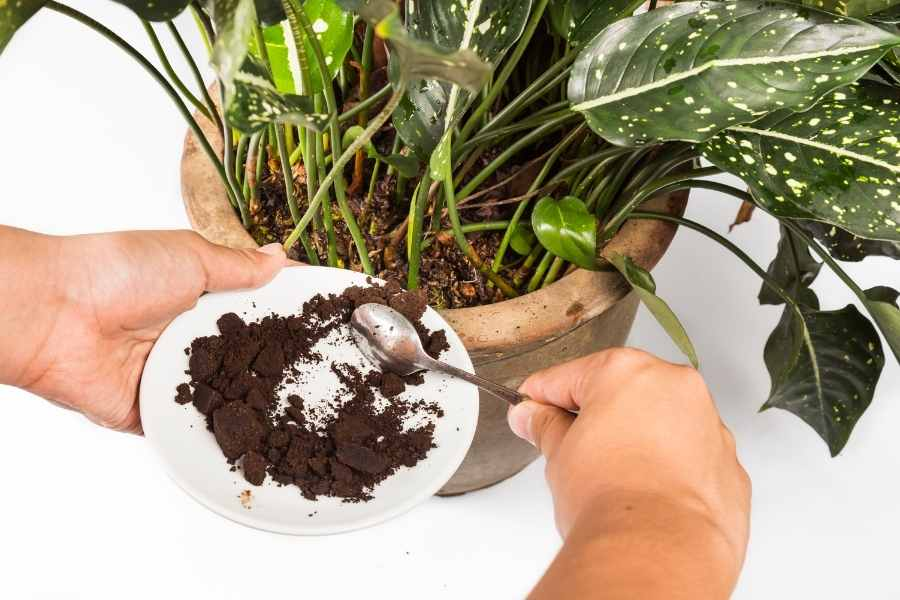 Coffee Grounds in Gardens