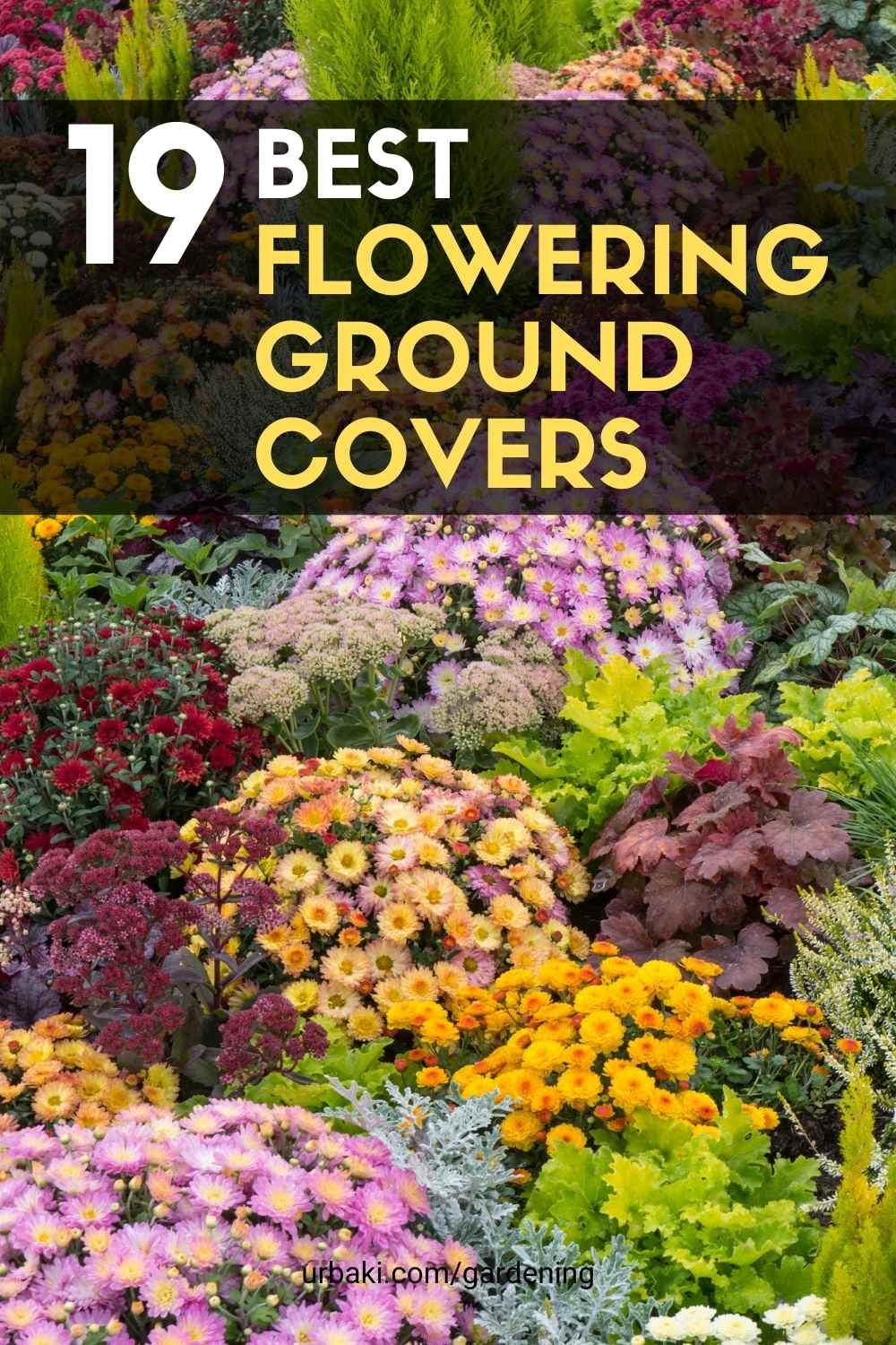 Flowering Ground Covers