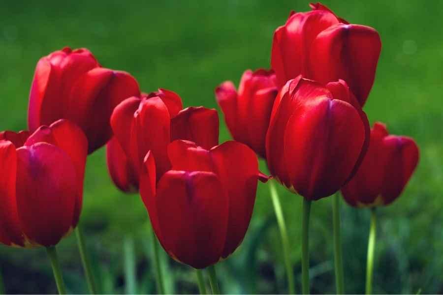 Flowers Zodiac Sign