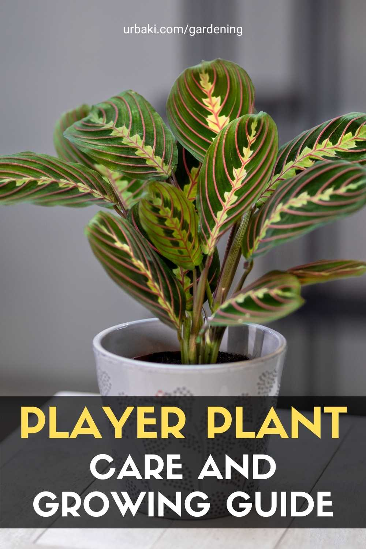 Player Plant