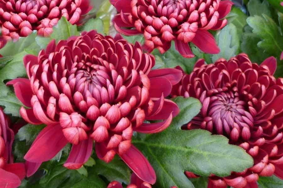 Flowers feng shui