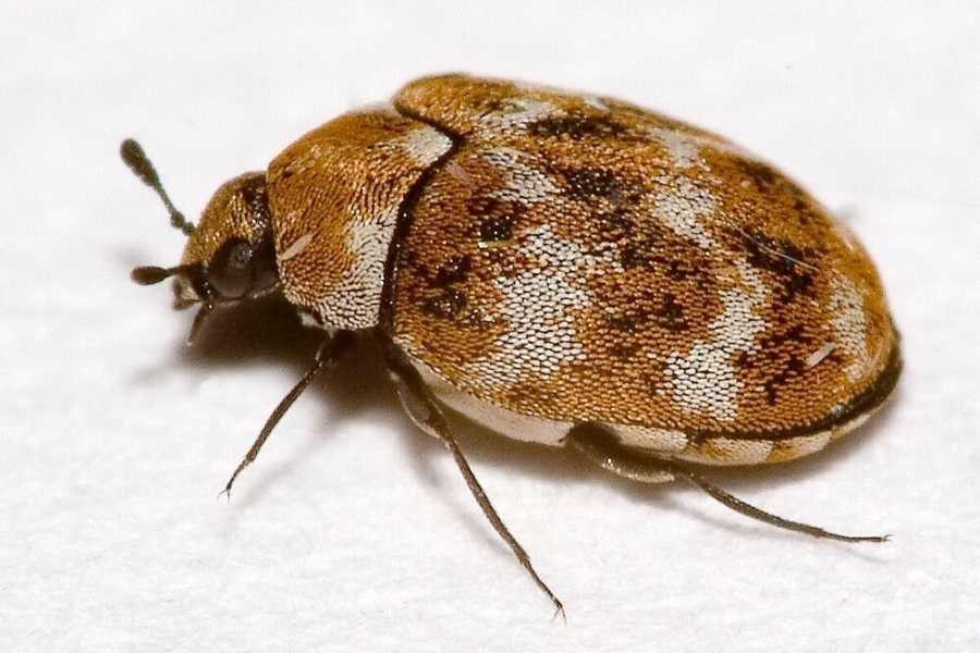 Identify and Get Rid of Bugs