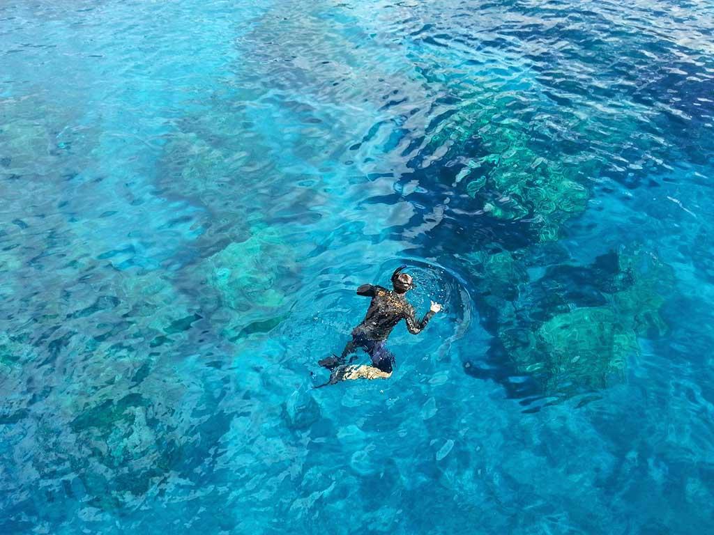 snorkeling in the great berrier reef
